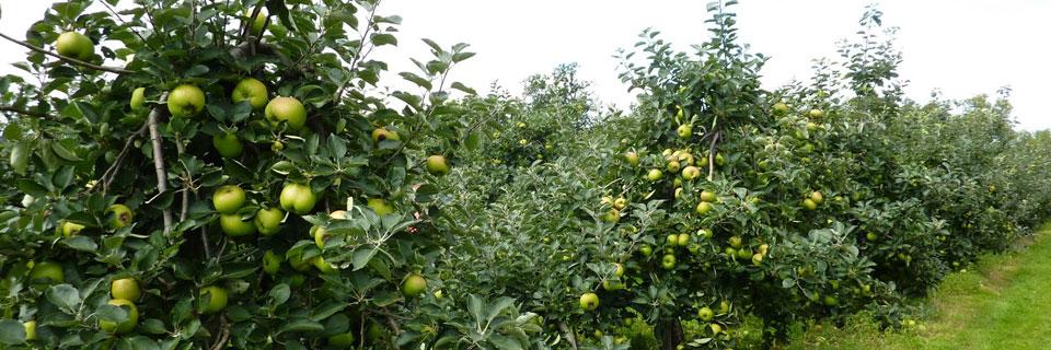 Tout savoir sur le Fruit Picking