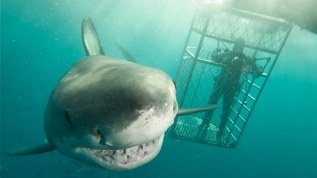 nager avec les requins à Port Lincoln