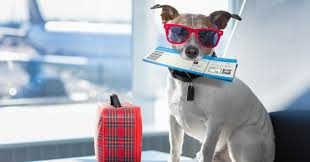 emmener son chien en avion